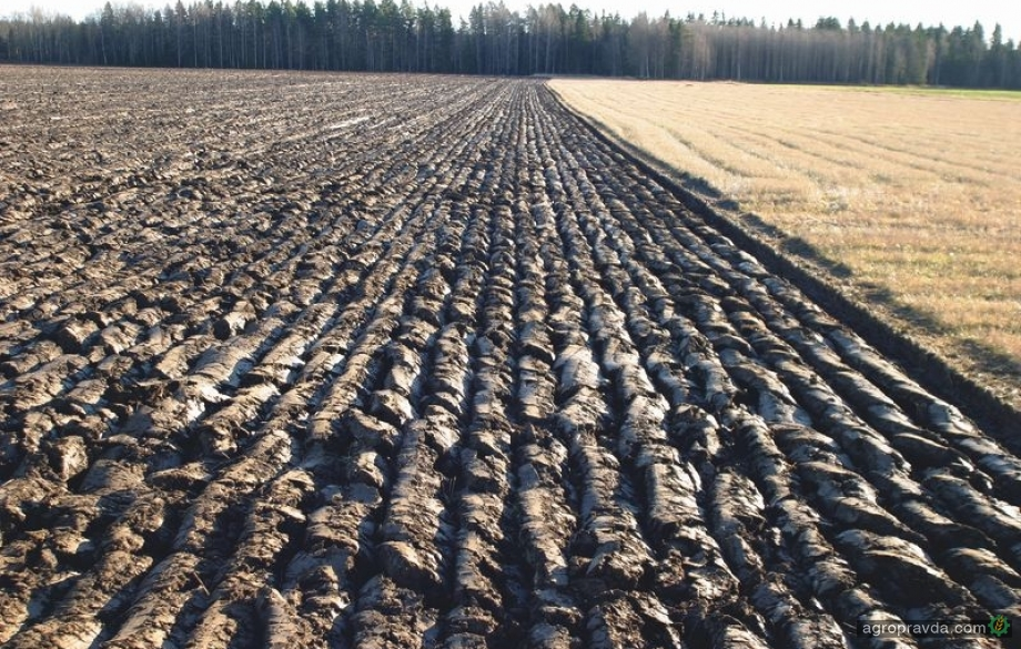 В Украине незаконно приватизировали более 5 миллионов гектаров земли