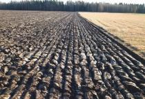 Названа реальная стоимость гектара земли в Украине