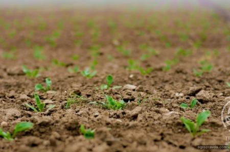 Зубовые бороны LOZOVA MACHINERY – гарантия хорошего урожая
