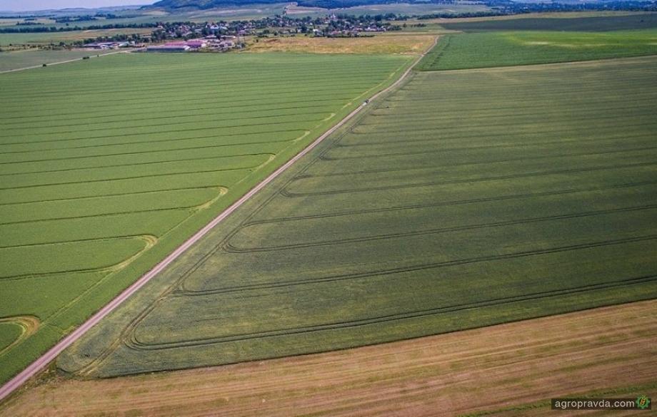 Аграриям Одесской области грозит неурожай