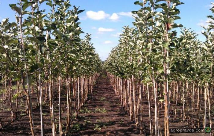 На что обращать внимание при покупке семян и посадочного материала
