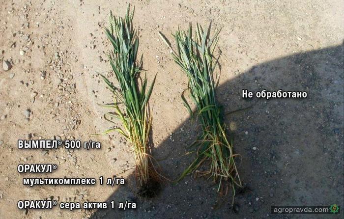1:3 в пользу сельхозпроизводителей