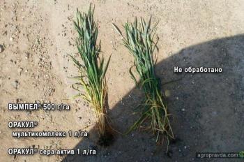 Как сельхозпроизводителям всегда оставаться в плюсе