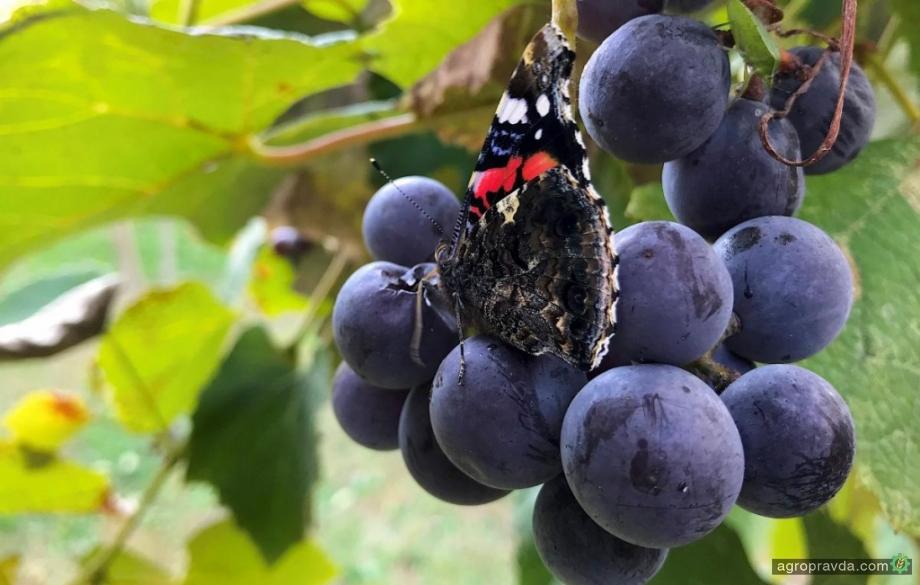 Что изменилось в механизме господдержки садоводов и виноградарей