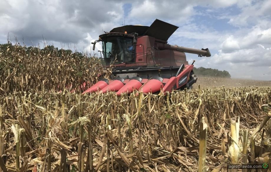 В СООО «Лан» убирают кукурузу с урожайностью 80 ц/га