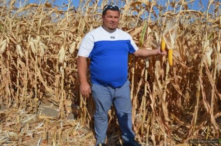 12 способів підвищити врожайність кукурудзи
