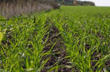 До аграриев дошло только 20% госпомощи