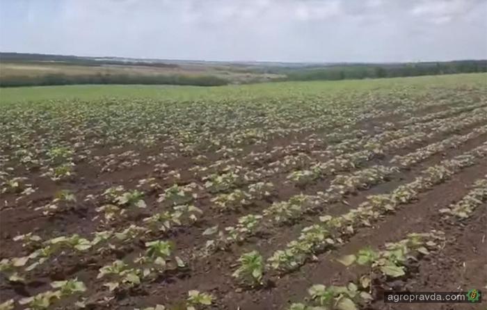 Фермер рассказал как вылечил землю плугом Lemken