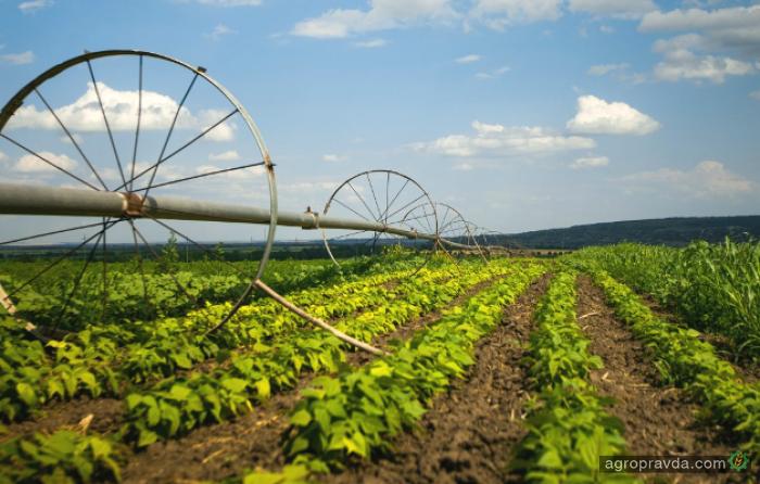 В 2017 году продукции растениеводства будет произведено на 178,7 млрд грн