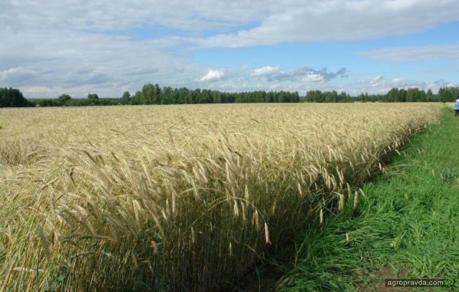 Кабинет Министров хочет стимулировать импорт отдельных зерновых
