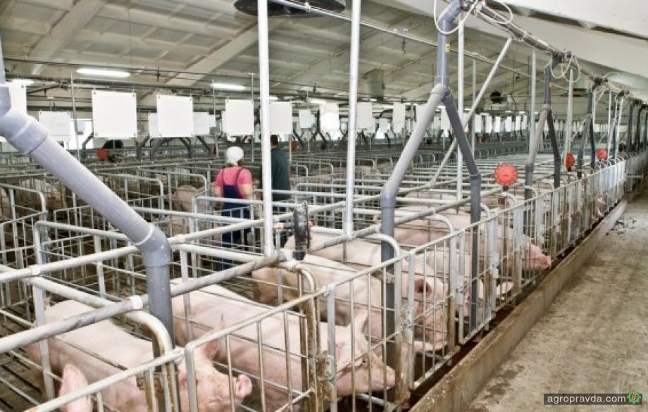 Немецкие компании хотят построить свинокомплекс в Львовской области