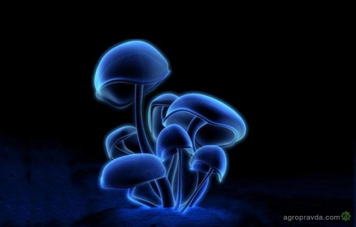 В РФ растет производство грибов