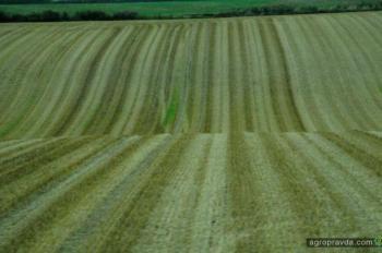 Чем агрострахование полезно для агробизнеса