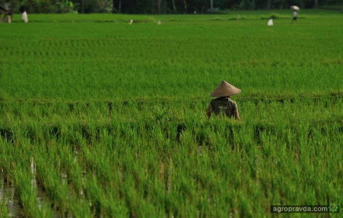 Китайцы придумали замену пестицидам