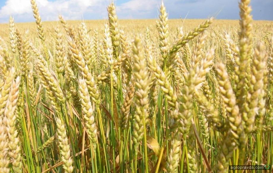 Как получить хорошую урожайность в неблагоприятных условиях. Видео