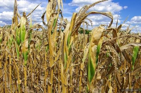 Аграрии рассказали о катастрофе с урожаем