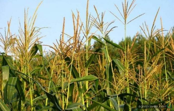 Украина экспортировала сельхозпродукции на $15,4 млрд.