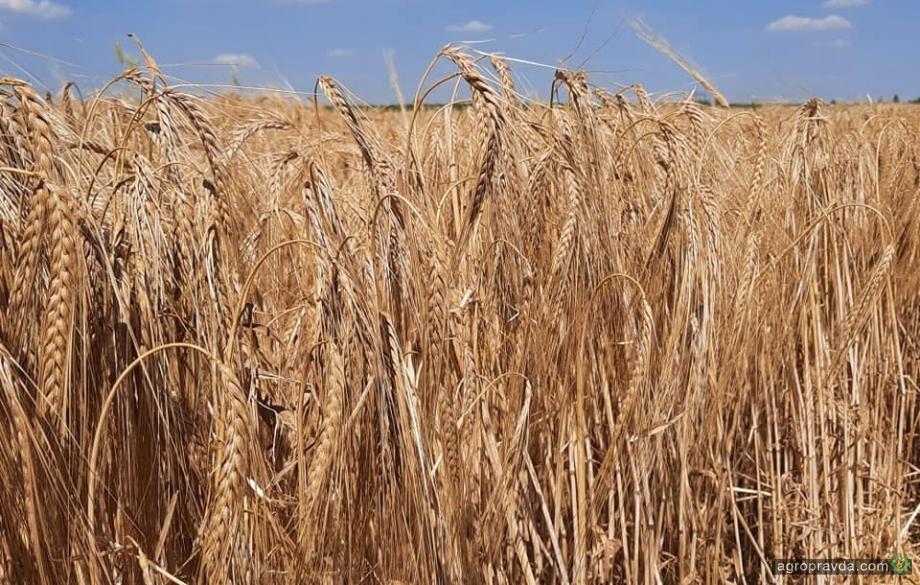 Как осадки повлияют на обеспеченность почвы влагой
