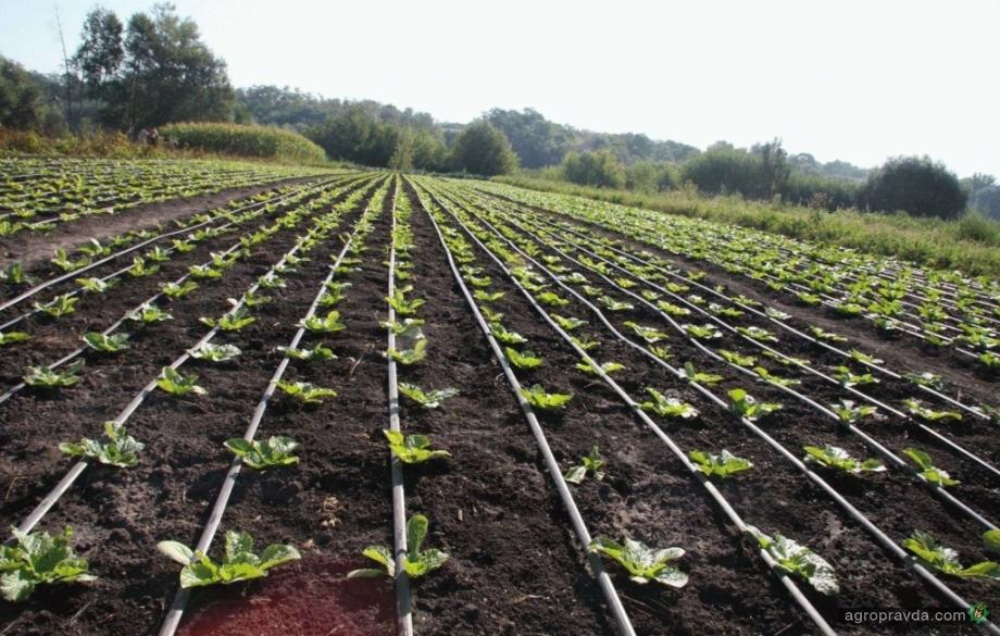 В каждый гектар овощей нужно вложить 150 тысяч гривень