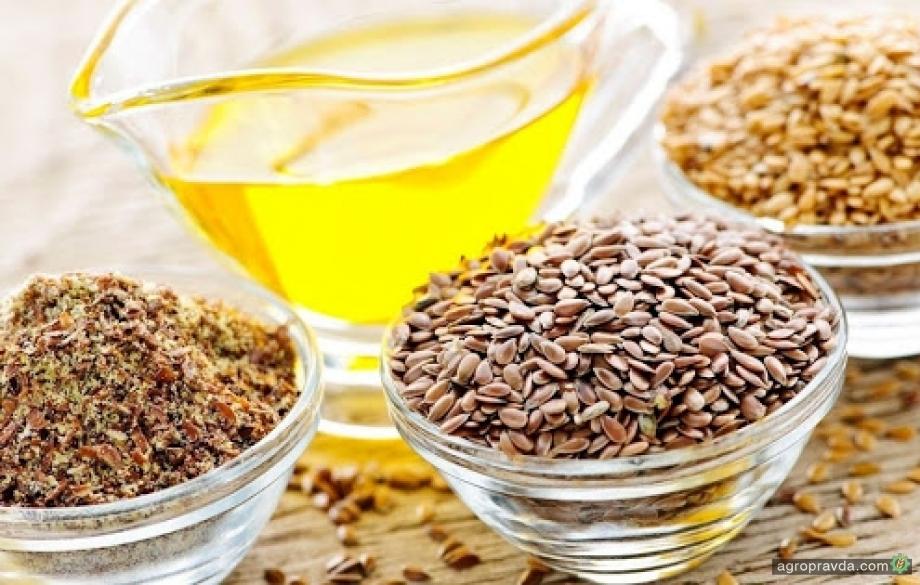 Украина может стать ключевым поставщиком масличных в ЕС