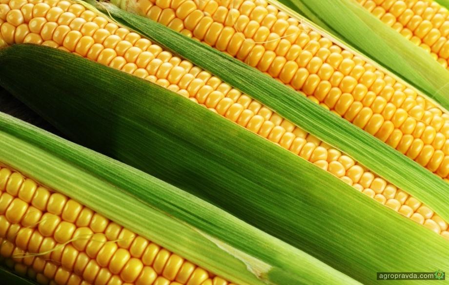 Какие новые гибриды кукурузы представила Агрокорпорация «Степова»