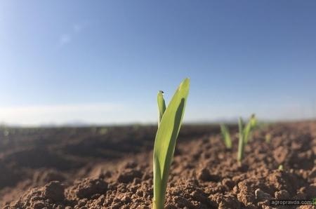 В чем преимущества дифференцированного посева кукурузы