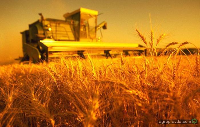 Урожай пшеницы будет выше, но белка - ниже