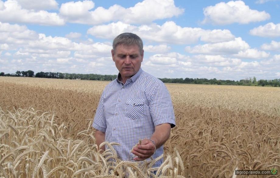 Отзывы реальных аграриев: озимая пшеница