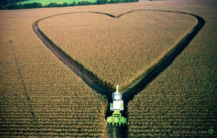 Как аграрии отмечают день Святого Валентина. Фото