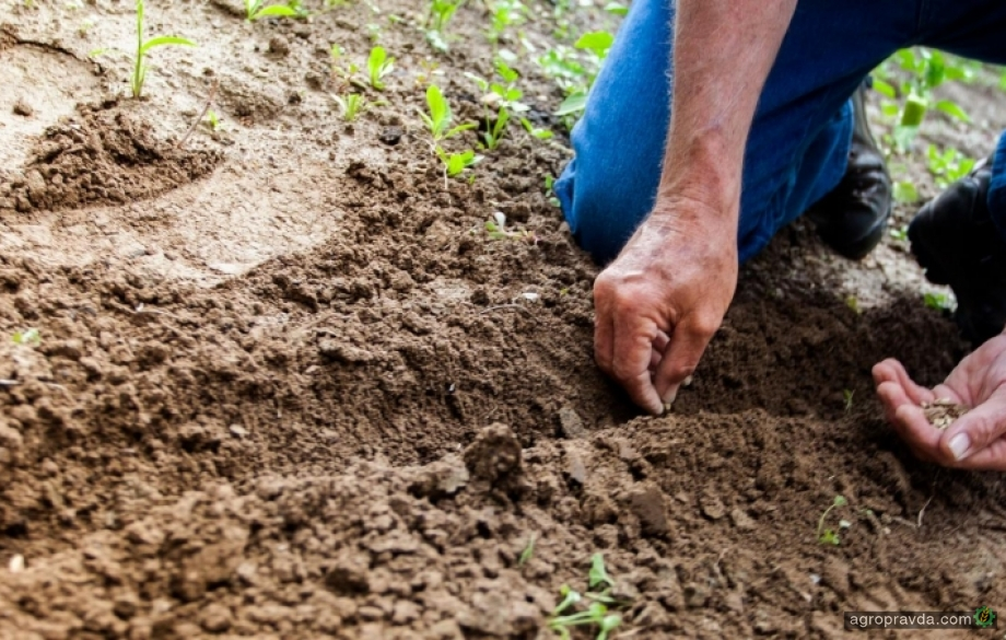 Минэкономики торопится ввести квоты на импорт удобрений из всех стран