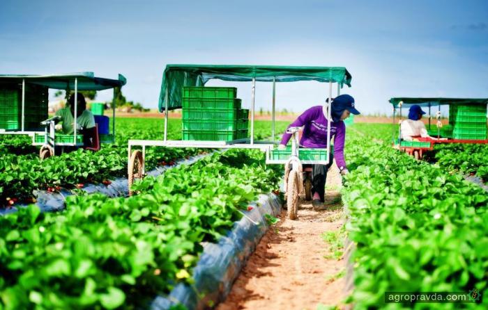 Как нестандартно собирают урожай