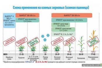 Как решить проблемы сева озимых и ухода за посевами