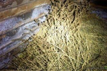 Полиция задержала фермера со взрывчаткой и коноплей. Фото