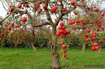 Аграрные расписки приобретают яблочный вкус