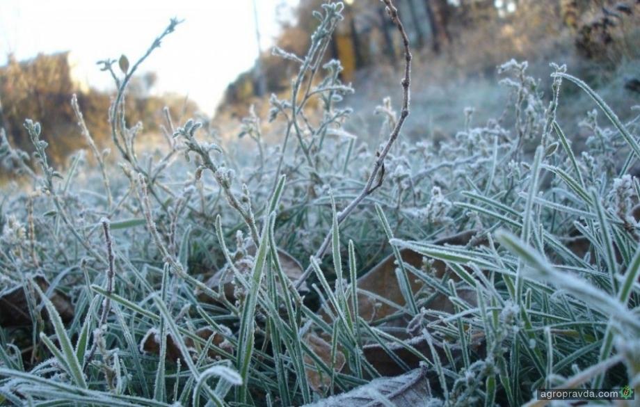 Как заморозки отразятся на осенней посевной