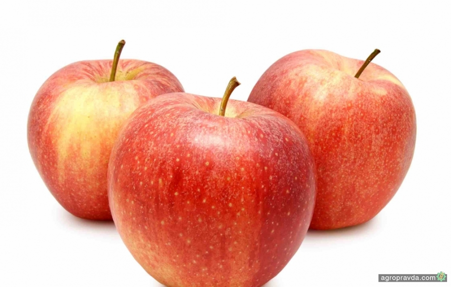 Какой сорт яблок самый перспективный для выращивания и продажи