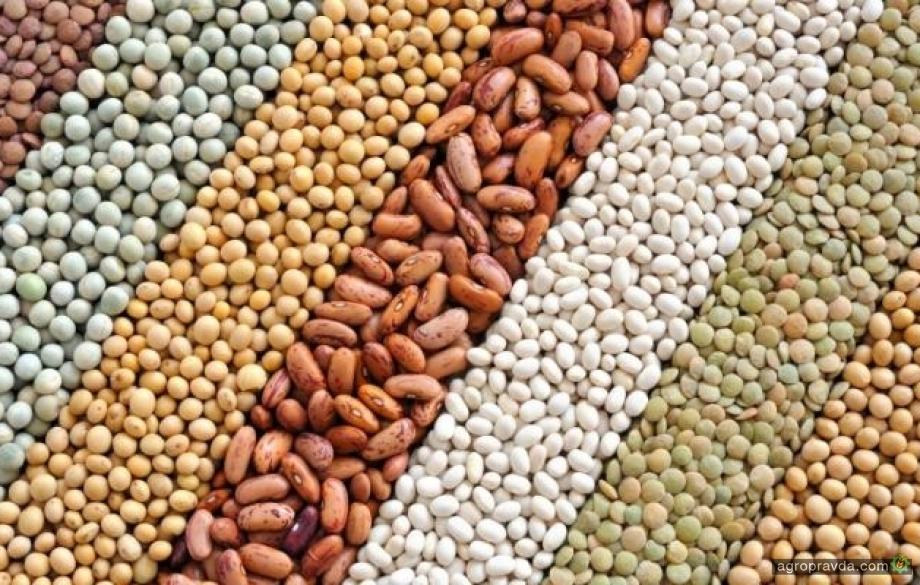 Украина установила новый рекорд по производству масличных