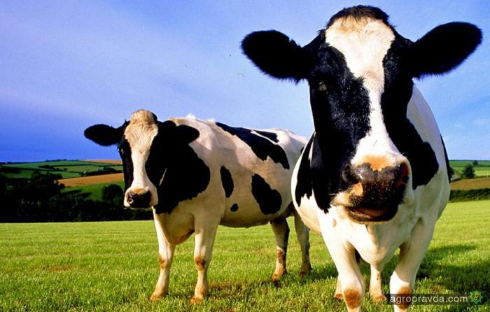 Аграрные расписки распространят на животноводство