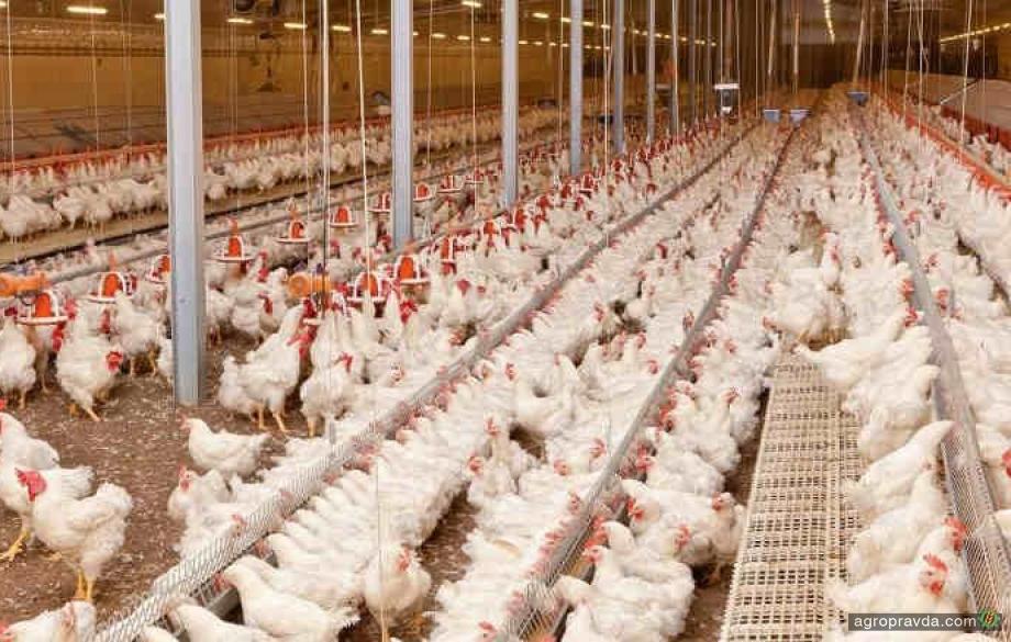 Новый 2021 год станет тяжелым для птицеводов