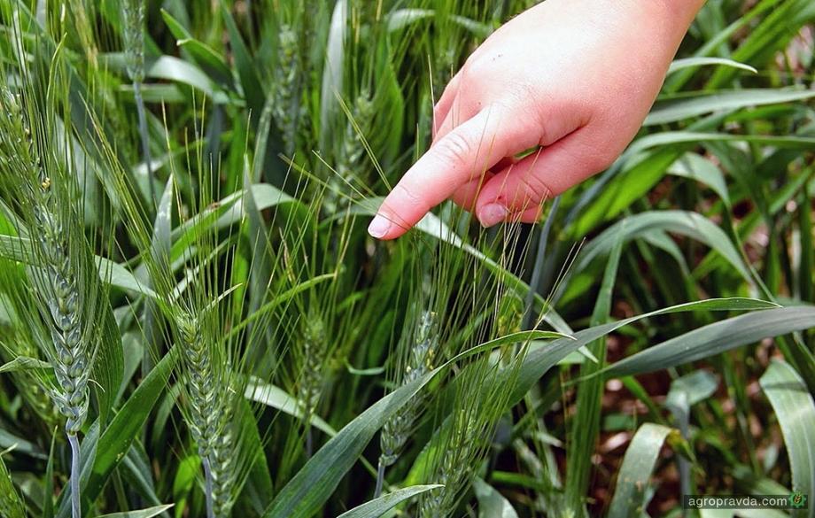 Corteva Agriciscience формирует новый портфель биологических препаратов