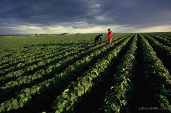 Что и чем будут сеять фермеры в этом сезоне. Обзор акций
