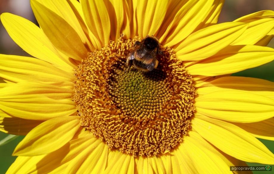 За мертвых пчел предлагают сажать на срок до 5 лет
