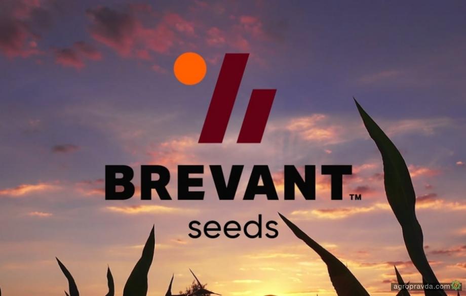 Какие новые гибриды подсолнечника предлагает Brevant seeds