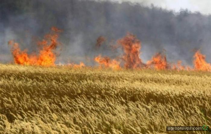 В Минске договорились о «хлебном» перемирии в зоне АТО