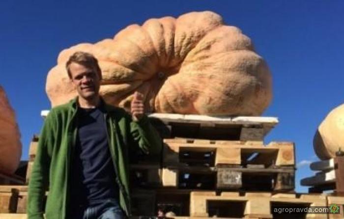 Фермер вырастил гигантскую тыкву