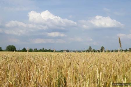 Николаевская агрокомпания задолжала больше 15 млн. за сельхозтехнику