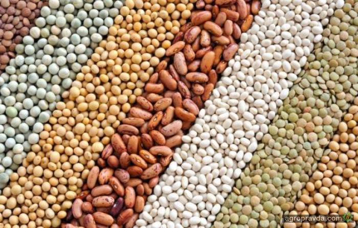 Экспорт масличных достиг 4,3 млн тонн