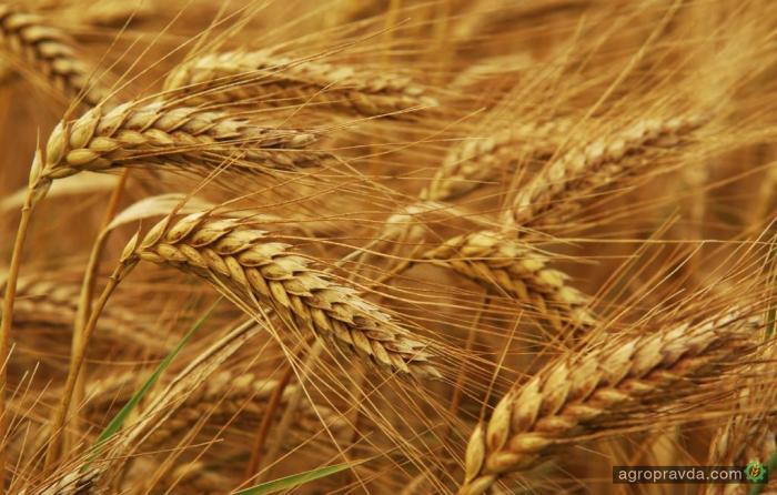 Украина может увеличить производство с/х продукции в два раза
