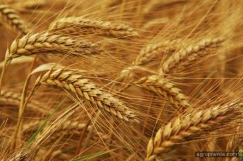 Какие реформы анонсировал Яценюк в агросекторе