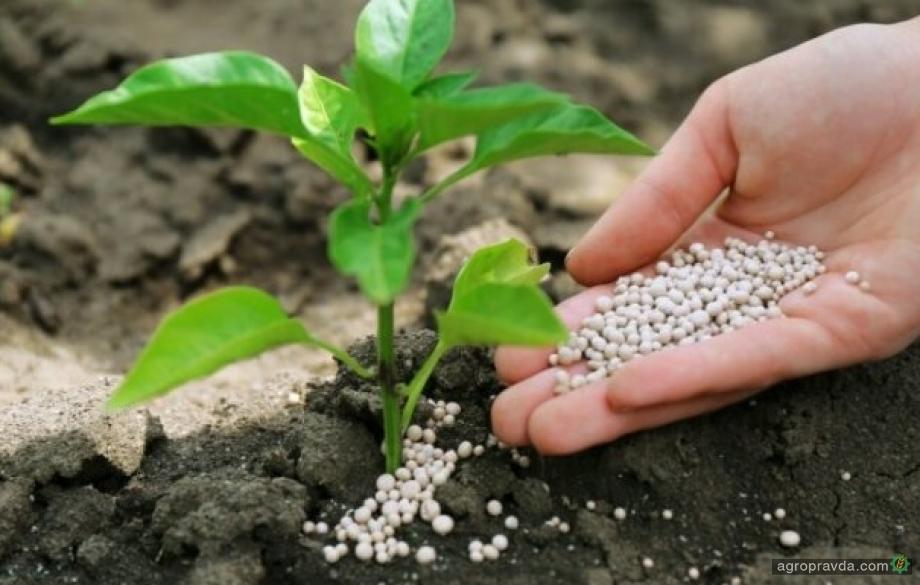 Украина нарастила потребление азотных удобрений